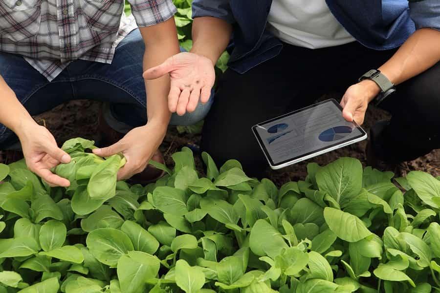 internet de las cosas en agricultura