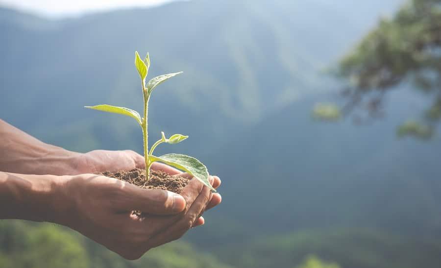 sostenibilidad medio ambiental